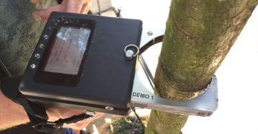 collecting data tree nursery